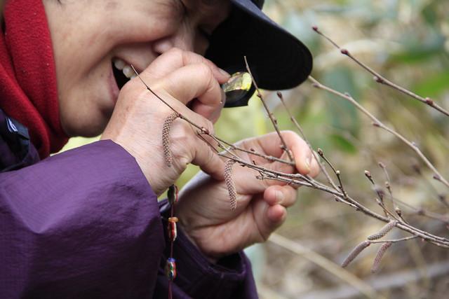 ツノハシバミの雌花をルーペを使って観察.楽しそう!