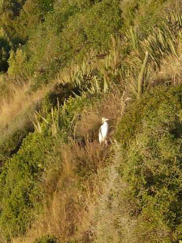 newzealand sunrise penguin coast southisland otago yelloweyedpenguin hoiho