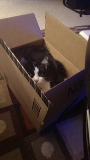 Josie hiding in the box