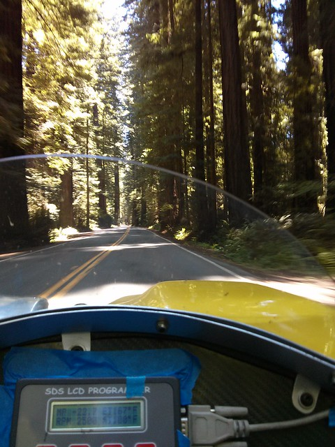 The Avenue of the Giants in a not very giant car