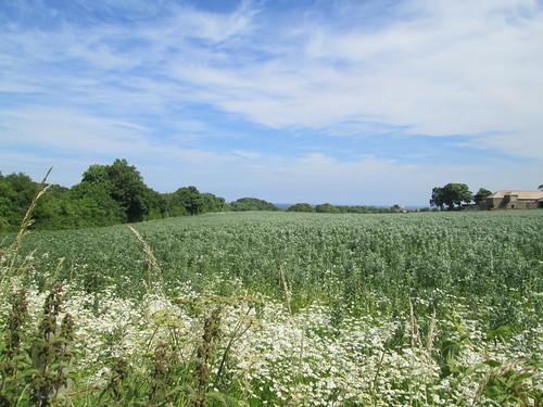 fields in Fife