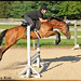 Wizard flies through the air with the greatest of ease... by Rock and Racehorses