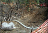 Contamination from the Acid Canyon outfall has been clean up to below residential levels