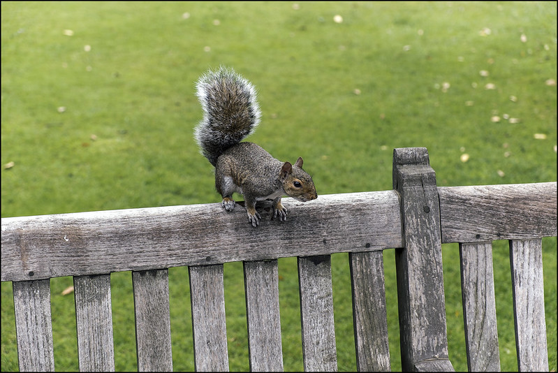 Tame Squirrel by Johne_uk