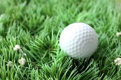 plant(0.0), grass(1.0), golf ball(1.0), green(1.0), golf(1.0), golf equipment(1.0), ball(1.0),