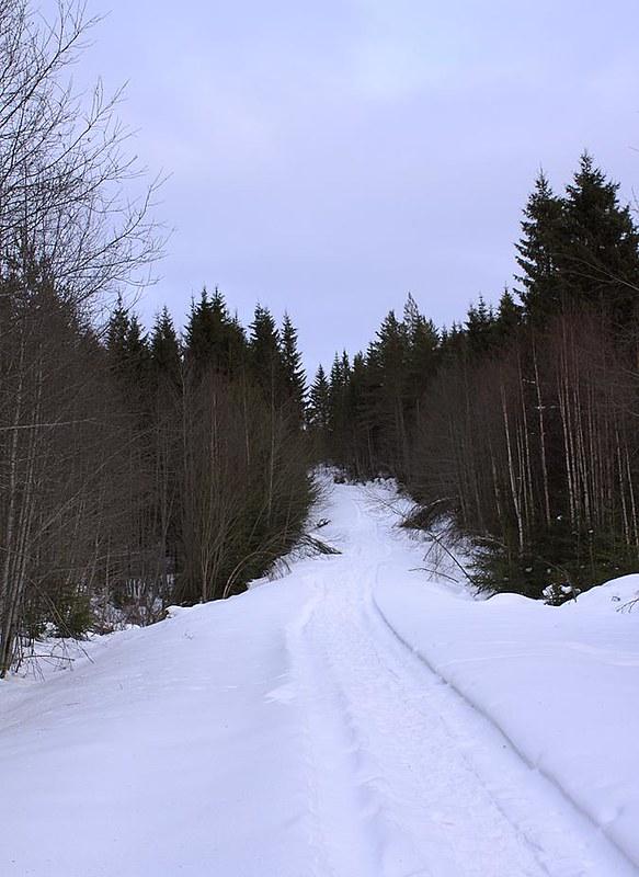 Typical Forest Trail Jädra Ås, Sweden