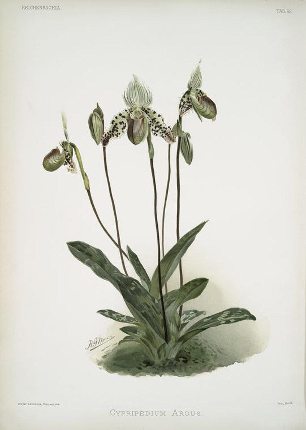 It is believed that the contemplation of orchids helps cope with grief. In China, orchids are also considered as possessor of some magical properties. In traditional Chinese cults and magic rituals orchids were used to drive away evil spirits. Orchid's seeds were used as an ingredient in the making of a love potion.