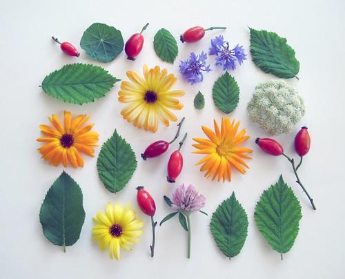 blommor och nypon i kvadrat