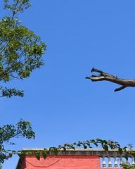 Blue Sky (Mexico City) 8