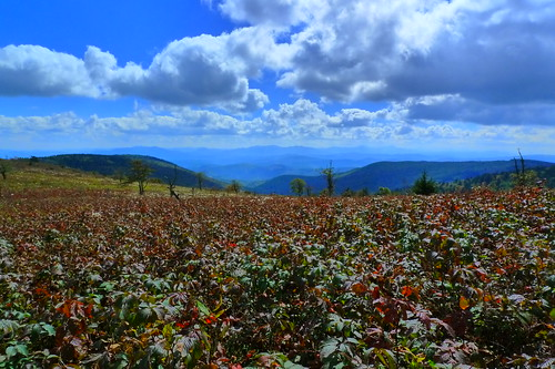 View from just off the Appalachian Trail - Mt. Rogers Recreation Area - near Mouth of Wilson, VA