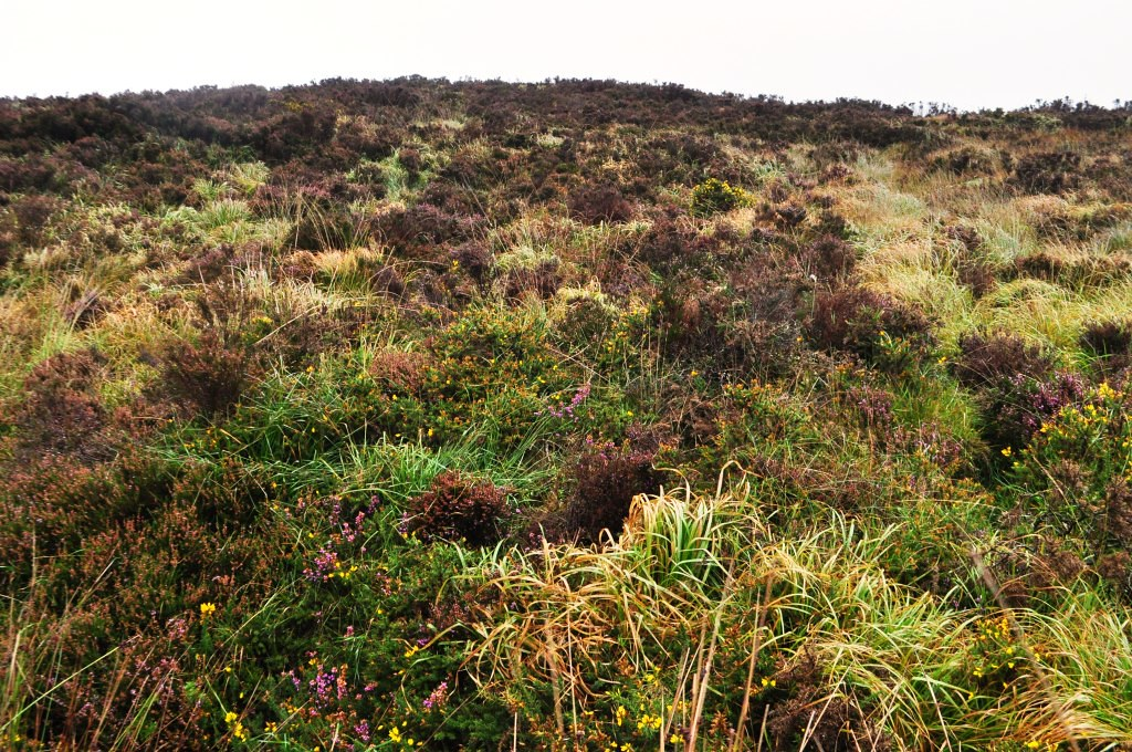Travel to Ireland: Wild Wicklow Tour, Blanket Bog in the Wicklow Mountains