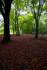 Autumn on Ashridge