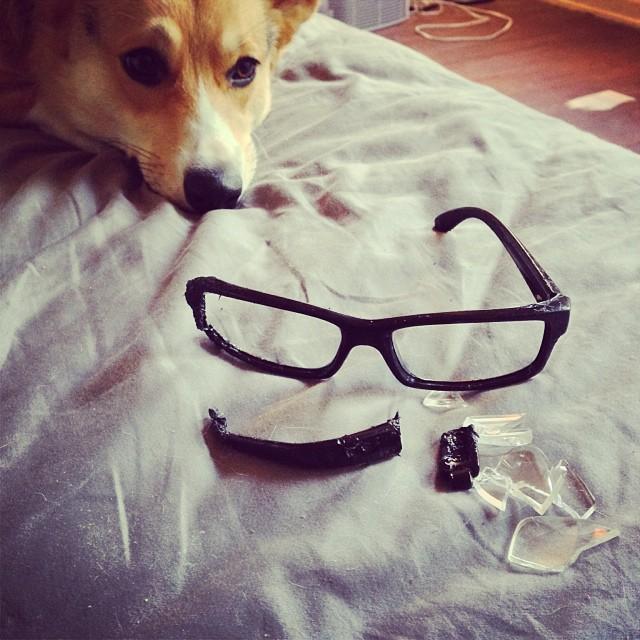Amelia Ate Glasses // www.acozykitchen.com