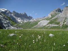 Hangmoor (Segnesboden) im Hochgebirge (Alpen)