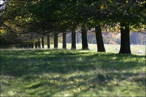 Bleinheim Palace park