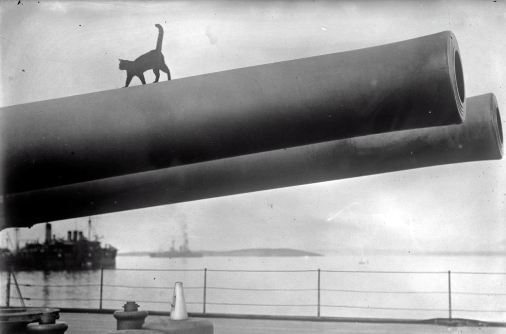 circa 1915:  The mascot cat of the HMS Queen Elizabeth on a 15 inch barrel