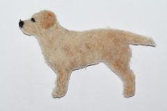 Labradorinnoutaja (3)