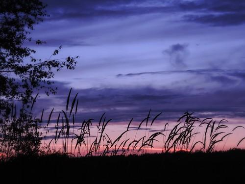 sunset grass silhouette nikon scenery britishcolumbia