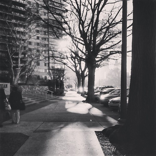 city morning trees winter shadow urban blackandwhite bw usa sunlight philadelphia monochrome america sunrise square unitedstates pennsylvania pa pennsylvaniaavenue willow squareformat philly grayscale fairmount cityofbrotherlylove iphoneography thephiladelphia instagramapp uploaded:by=instagram