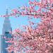 Shinjuku Spring by shinichiro*