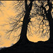 Avebury trees  by tina negus