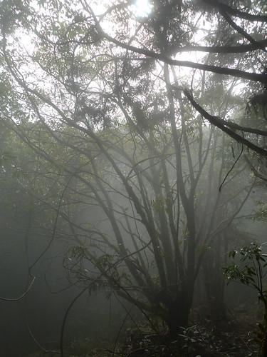 20140322-馬崙山 (297)