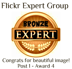 Bronze level Award