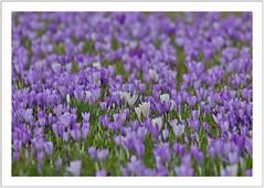 Frühling (spring)