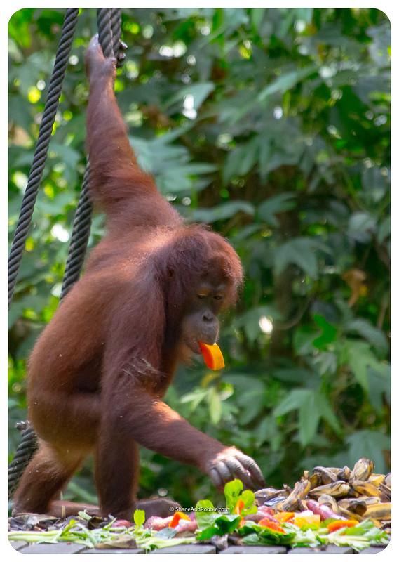 Borneo-20170413-_MG_8220
