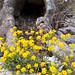 Small photo of Agioi Theodoroi, Evros, Greece