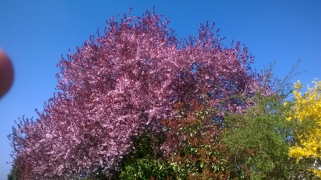 The colours of spring