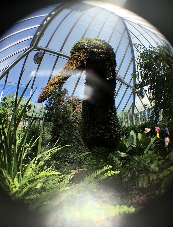 Attack of the Giant Topiary Kiwi!