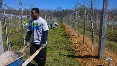 Crop Mob with Sam's Club and community volunteers