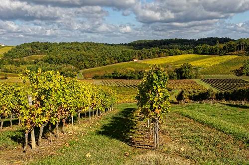 Gironde: premières côtes de Bordeaux - Omet Donzac - Vignobles