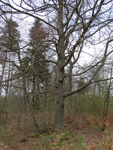 Bäume in der Muna