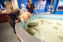Petting a shark at the Nauticus museum