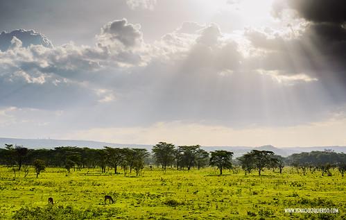 Kenya - Nakuru 12