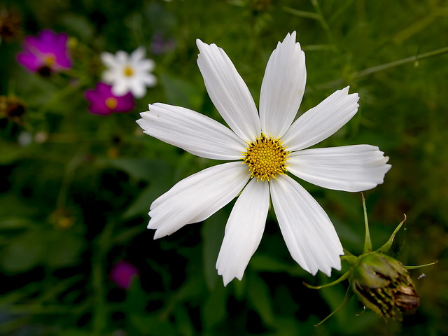White Flower - PL1+14-42