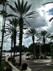 Palm Storm