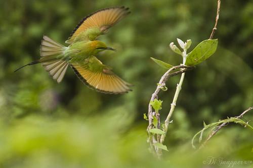 canon7d sigma170500 vadodara gujarat birds birdphotography disnapper inandaroundvadodara vadodaraphotography photographyinandaroundvadodara placestovisitinandaroundvadodara vadodaragujaratbarodabarodagujaratvadodaraindiabarodaindiaareasaroundvadodaraareasaroundbarodaplacestovisitinandaroundvadodaraplacestovisitinandaroundbarodaphotographyinvadoaraphotographyinbarodascopeofphotography guyonblackybx gnaveenkumarreddy ganugapentanaveenkumarreddy gnr ganugapenta