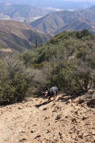 Brubaker Trail
