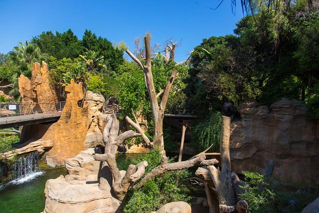 Bioparc Fuengirola Simpanssi Chimpanzee