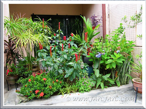 Attractive plants and flowers at the inner border to brighten our front yard, Sept 10 2013