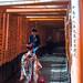 Shichigosan @ Fushimi Inari by destebani