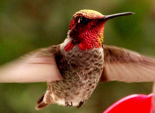 132284-2.jpg by Robert W Gilcrease