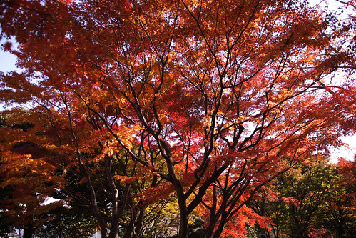 紅葉 by leicadaisuki