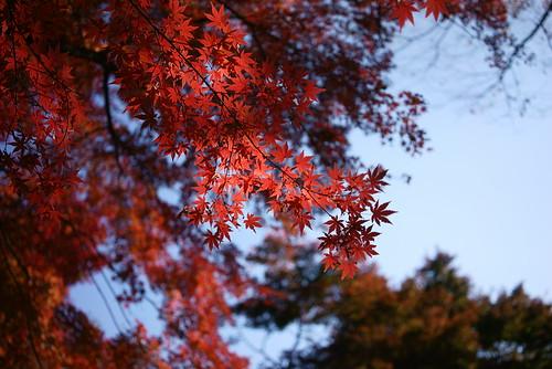 紅 by leicadaisuki