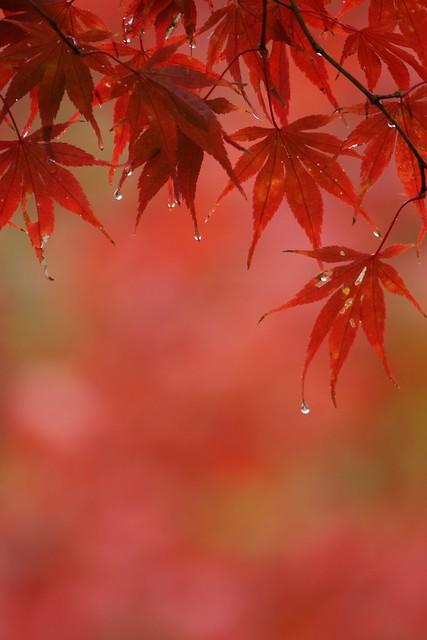 写真_紅パターン2