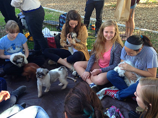 Students commune with puppies during the traditional end-of-semester de-stressing party in December 2013.