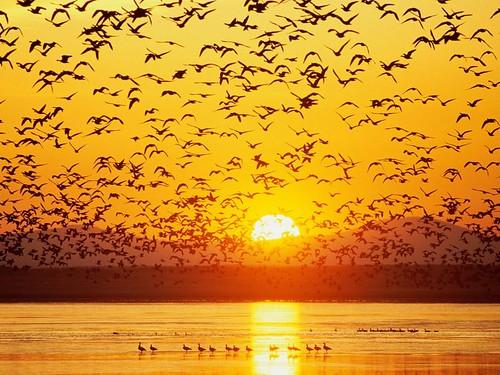 birds-quran